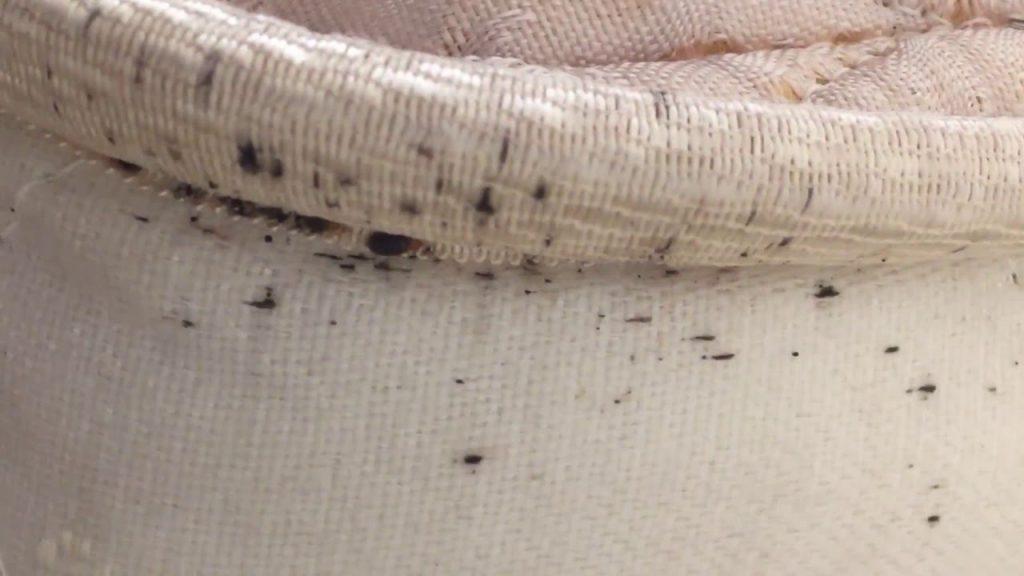 segnali infestazione cimici del letto